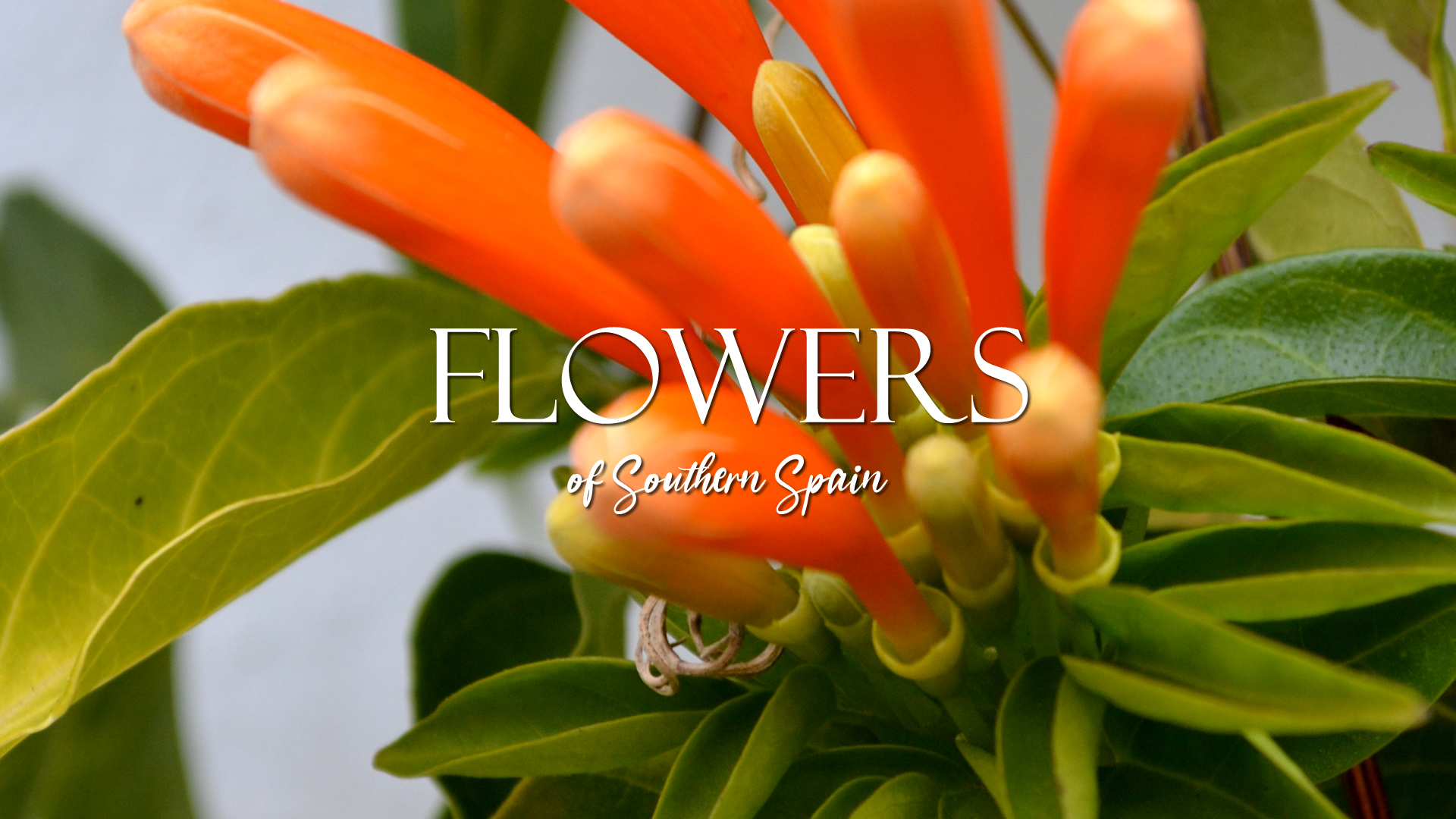 Flowers of Southern Spain